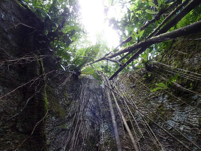 Cuyabeno_Wildlife_Reserve_1